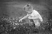 Little Flowers Fo...