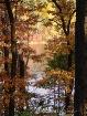autumn backyard
