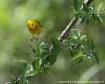 Warbler in Spring