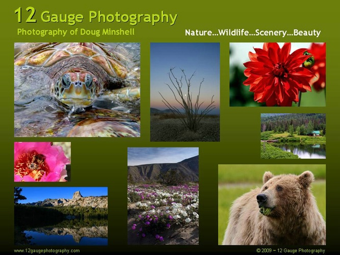 Welcome to 12gaugephotography.com