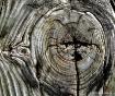 weathered wood #6...