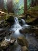 Redwood Cascade