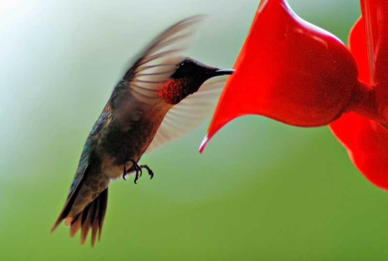 In Flight !