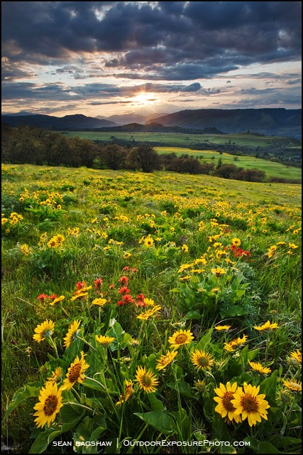 Rowena Hills