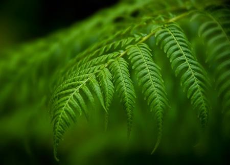 Tropical Fern