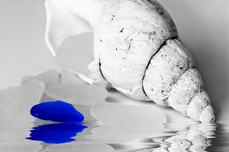 Shell & Seaglass