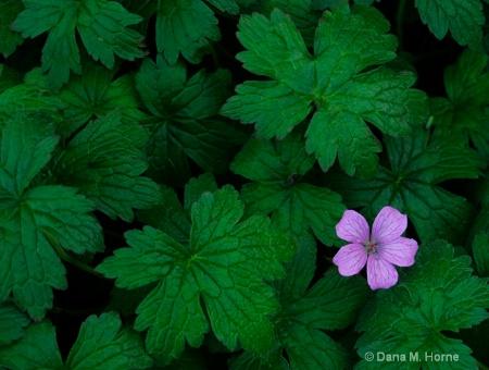 Purple Flower In A Sea Of Green