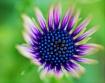 Hypnotic Flower