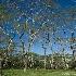 © Wendy Kaveney PhotoID # 8588518: Tubuai Trees