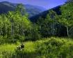 High Uintah Mount...