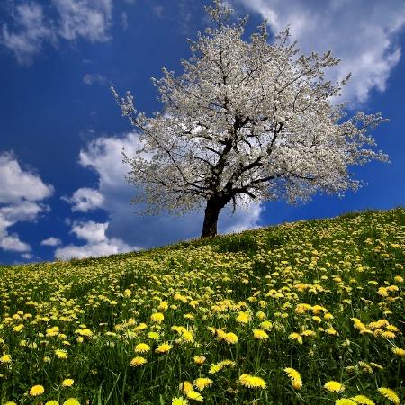 One Tree Wonder