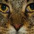 © Annie Katz PhotoID # 8601595: cateyes
