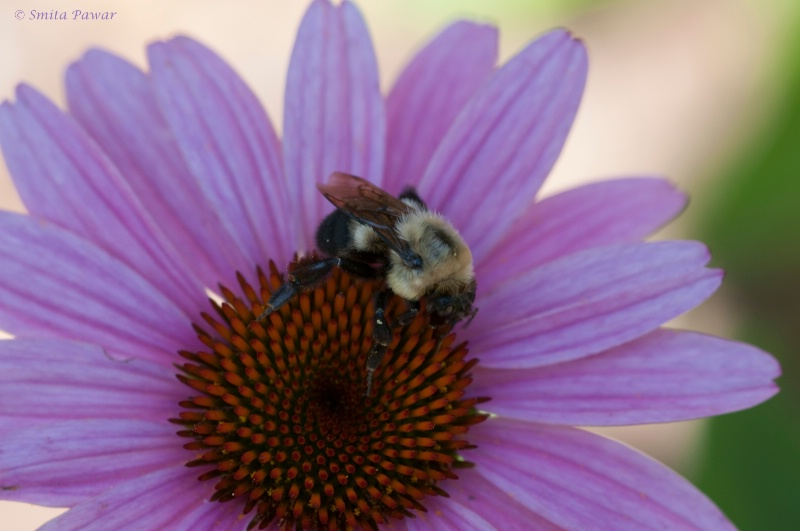 Pollination at work