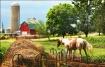 Rural Rhapsody