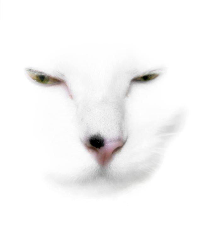 Luna, White On White - ID: 8666362 © Lynn Andrews