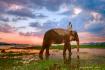 Elephant at Lak L...