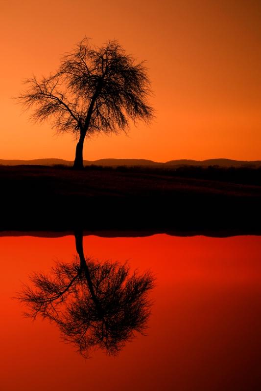 Monocacy Tree Reflection - ID: 8675139 © Don Johnson