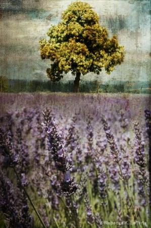 Lanvender Fields