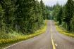 Flowered Roads