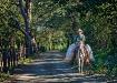 Costa Rica Cowboy