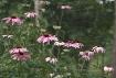 Cone Garden