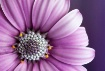 Fragant Flower