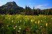 Mount Rainier Pas...