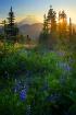 Mount Rainier Sun...