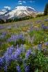 Sunrise Meadow (M...
