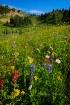 Tipsoo Flower Fie...