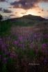 Skagen Sunset (De...