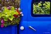 Flower Truck Upcl...