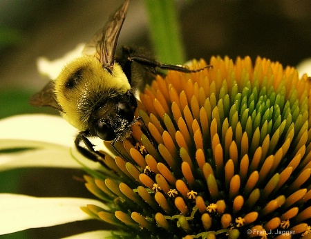Pollen Searcher