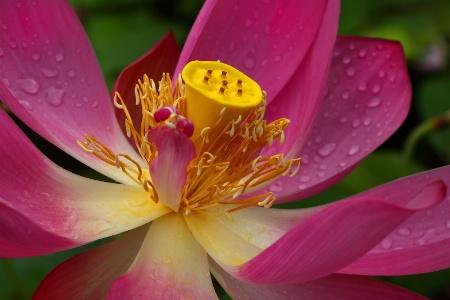 Grand Lotus 2