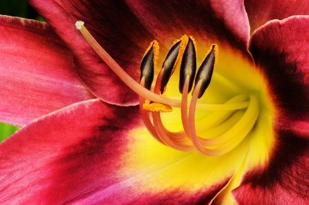 Heart Of The Lilly