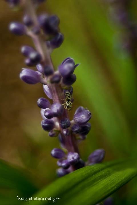 itsy bitsy spider~