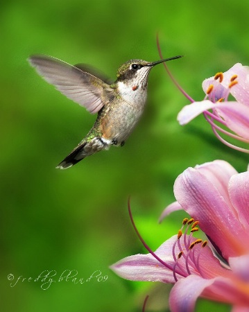 A Passion for Nectar