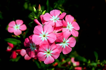 Beautiful pinks.