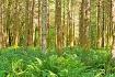 Quinault Rainfore...