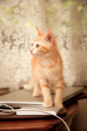 Feline Imprints