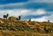 Alpine Tundra gat...