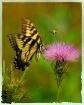 Butterfly, Bee & ...