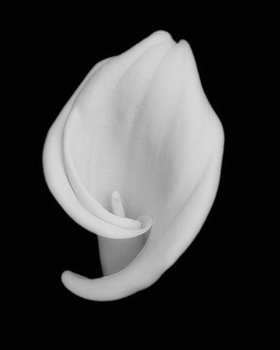 callie on black 1 - ID: 8967218 © Earl H. English