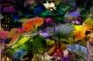 Colourplay