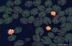 Water Lillies fro...