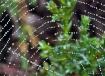 spider web after ...