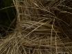 tied grass
