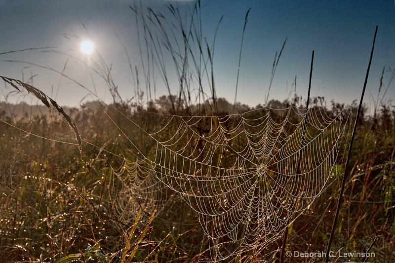 Sun Shines on Spiderwebs - ID: 9091477 © Deborah C. Lewinson