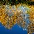 © Becky J. Parkinson PhotoID# 9102442: Fall Reflection