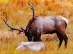 union of elk